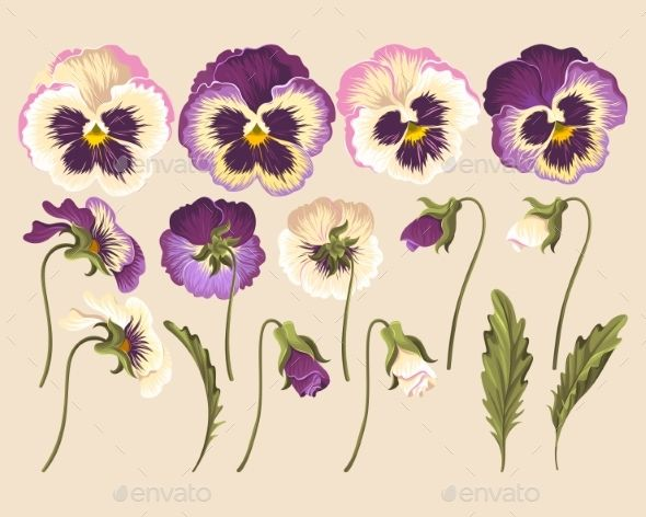 Set Of Pansy Flowers Pansies Flowers Acrylic Painting Flowers Flower Painting