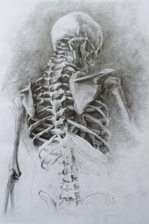 Skeleton Drawing Skeleton Drawings Anatomy Art Anatomy Sketches