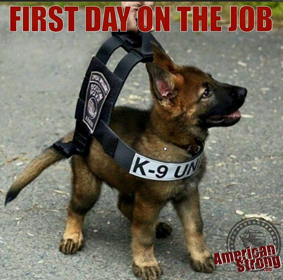 First day on the job. K9 Unit. Dogs, Cutest puppy ever