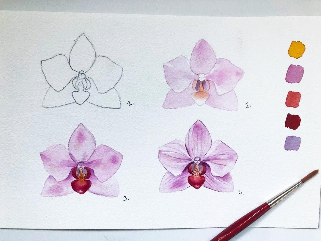 Pelin On Instagram How To Paint A Basic Orchid Orchidee