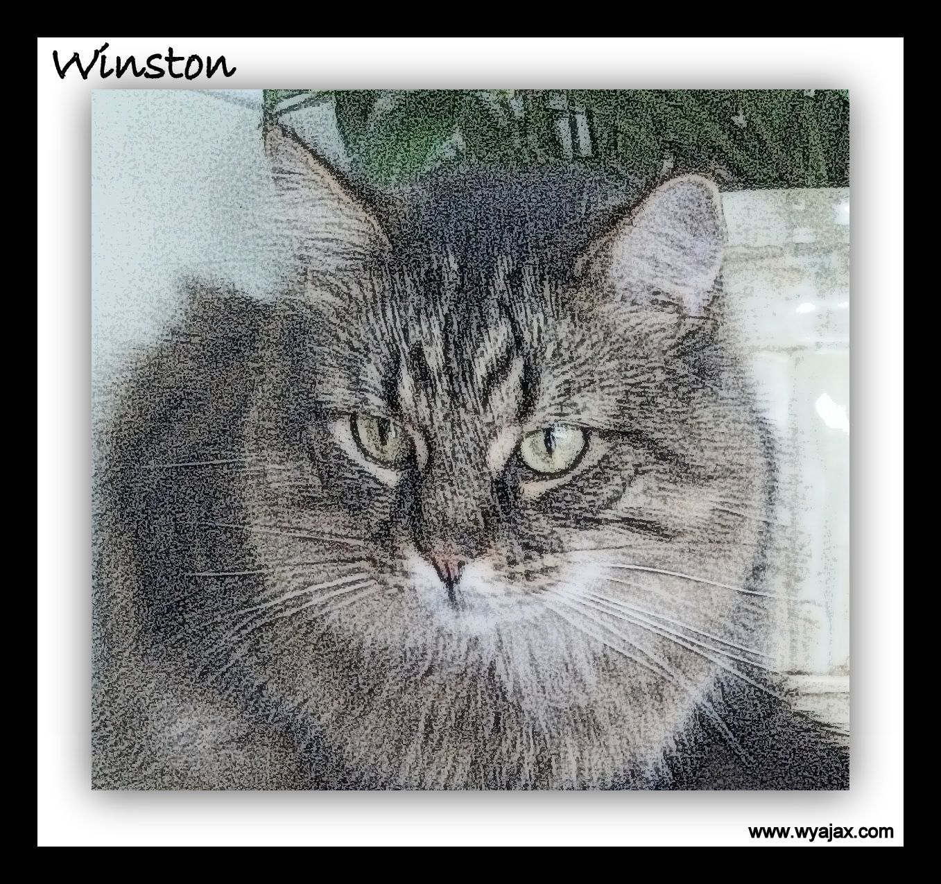 Winston...art Jacksonville, FL Pet Sitter providing Pet