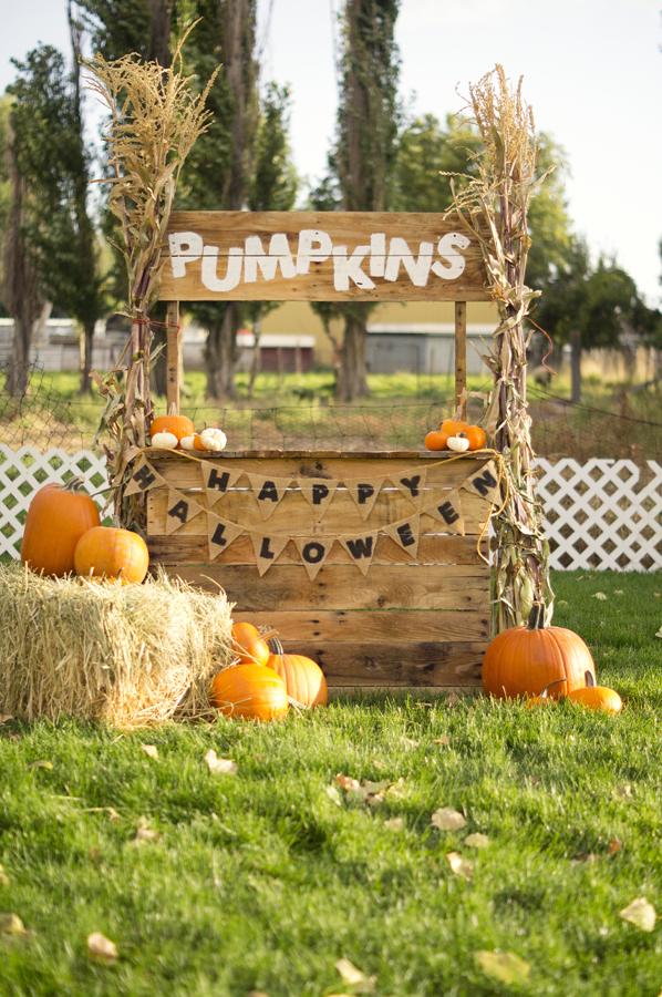 ashley moore carroll photography | halloween/fall minis