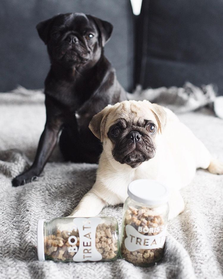 Pug gifts, gift ideas for pugs, pug lover gifts