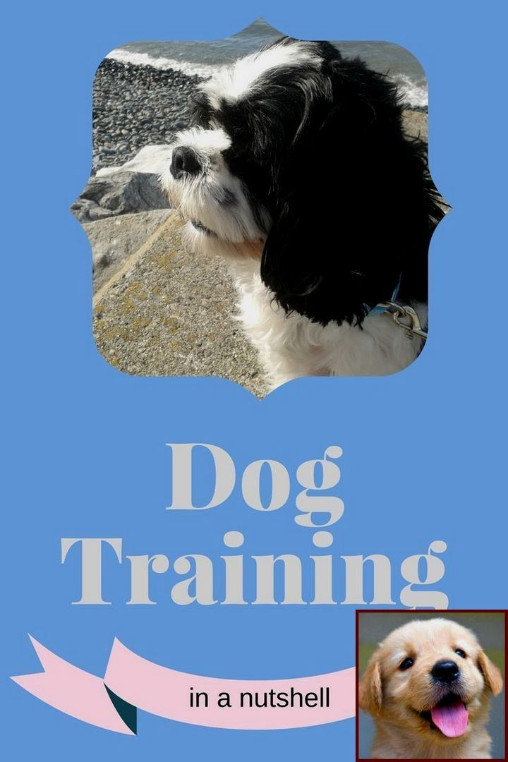 1 Have Dog Behavior Problems? Learn about House Training