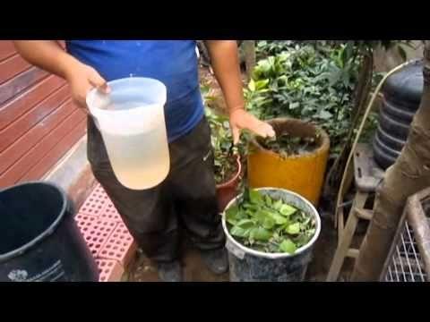 Abono organico: Tecnica Eco balde - YouTube