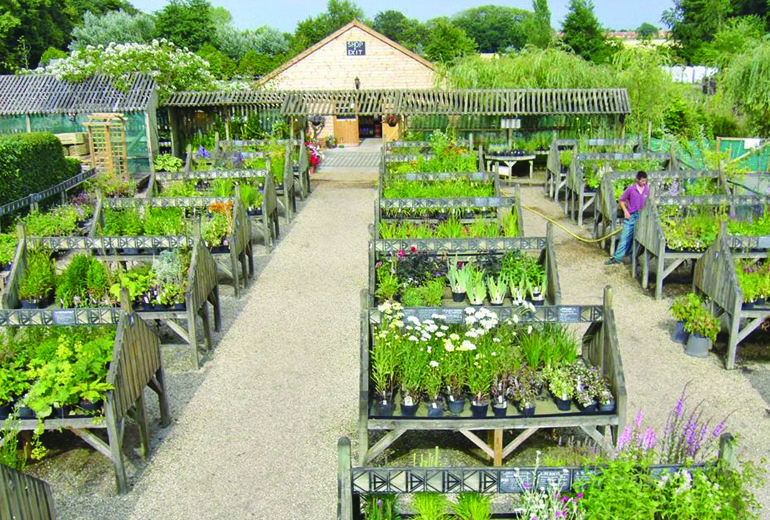 Greenhills Nursery Supply These Type Of Plants For You Garden