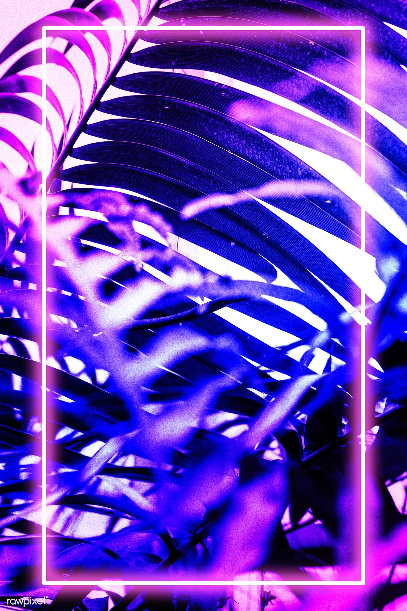 Neon tropical Areca palm leaves frame   premium image by ...