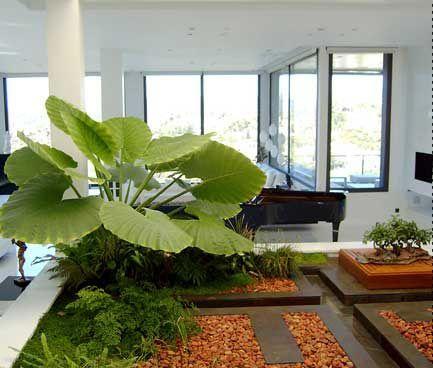 La decoraci n con plantas de interiores te ofrece diversas for Patios decorados