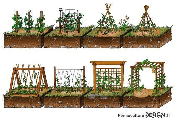 Exemples De Tuteurs Pour Plantes Grimpantes Dans Son Potager En
