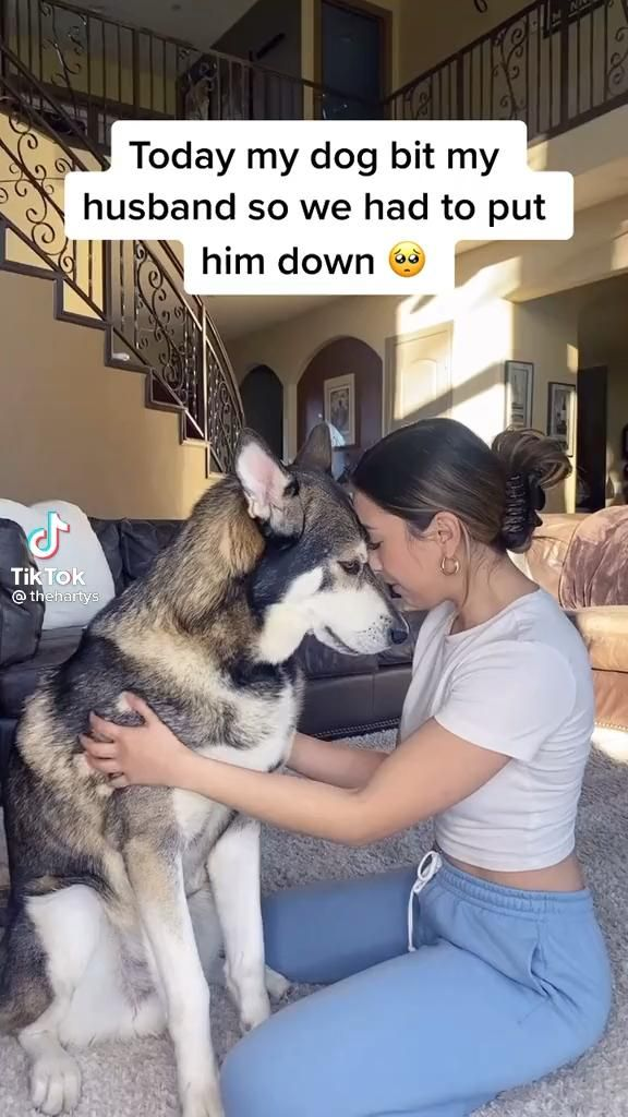Pin By Abina Dushyanthan On My Pins In General Video In 2021 Funny Animal Jokes Funny Animals Really Funny Memes