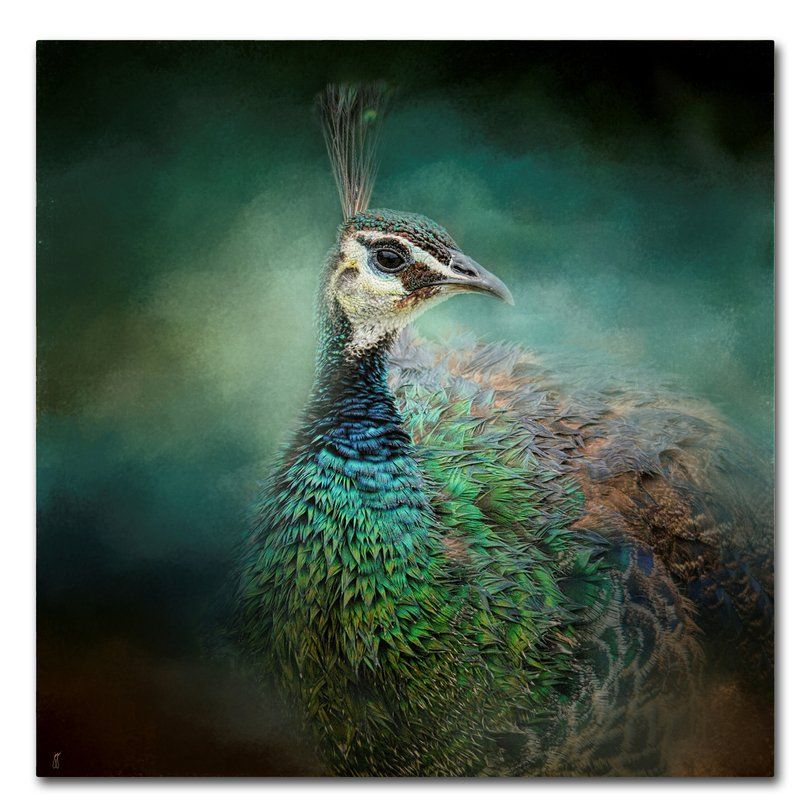 Peacock 12 Graphic Art Print On Wrapped Canvas In 2021 Pauw Vogels Bloemen