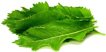 Inspiration til brug af de grønne toppe / blade  fra persillerod, kålrabi, peberrod, pastinak mm