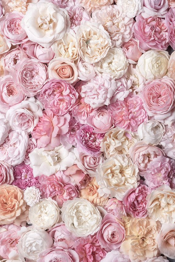 Rose Photography - Bed of Roses III, Floral Still Life, Botanical Photograph, Nature Photography, Romantic Home Decor, Large Wall Art