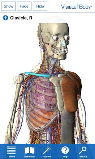 Visible Body 3D Anatomy Atlas v1 1 0 apk Requirements