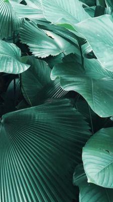 Random Iphone Green Water Nature Plants Backgrounds Wallpapers Lockscreen Homescreen Duvar Kagitlari Duvar