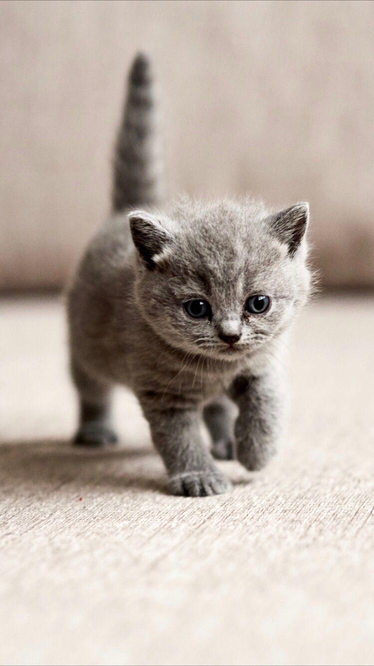 Cute Kitten Cute Baby Cats Baby Cats Kittens Cutest