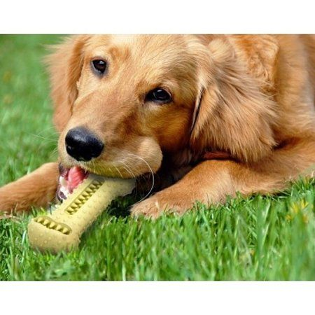 Pets Dog Toys Teeth Cleaning Dental Care