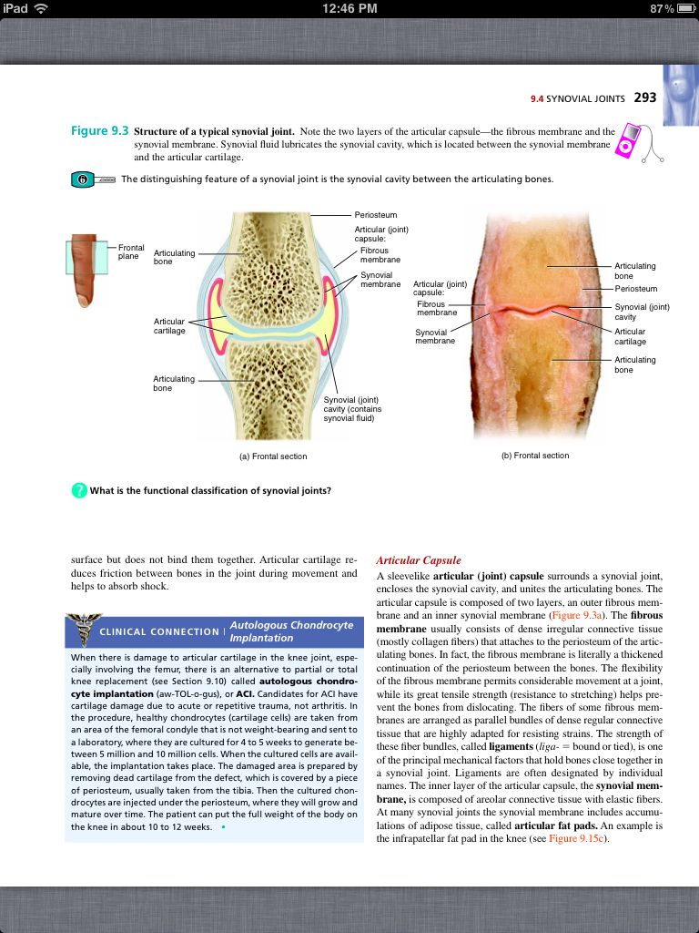 Principles of Anatomy and Physiology, Chapter 9, Joints, 5, book pg ...