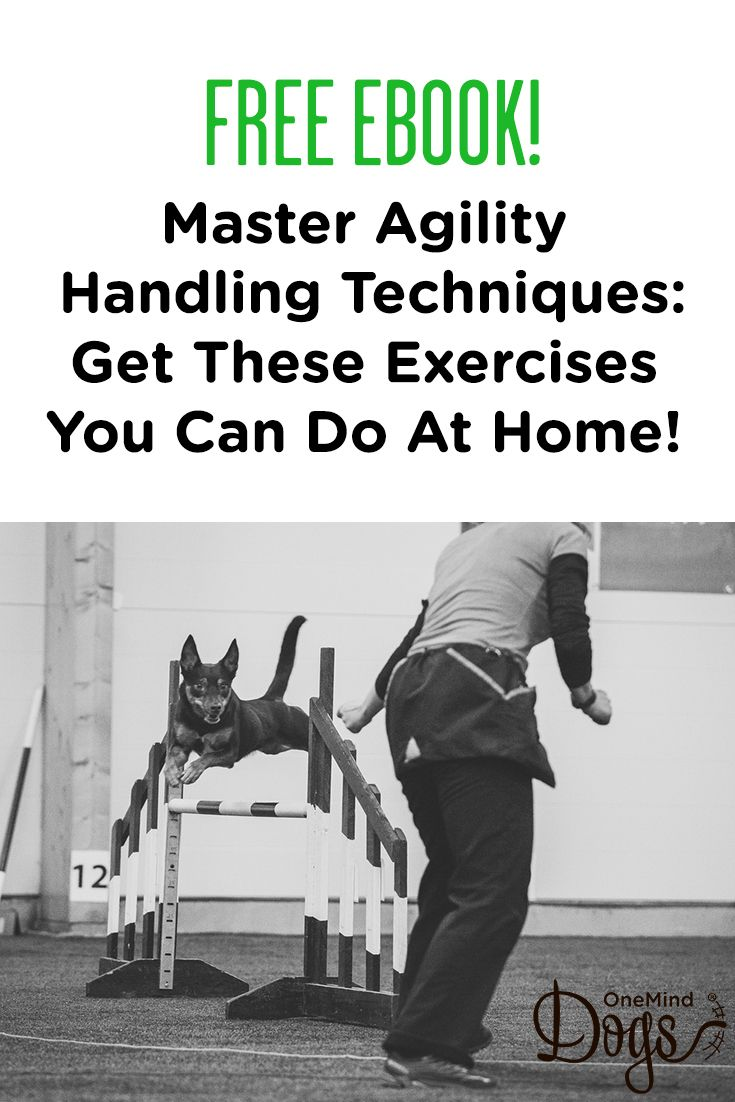 Practice At Home Technique Applications Dog Agility Ebook Will