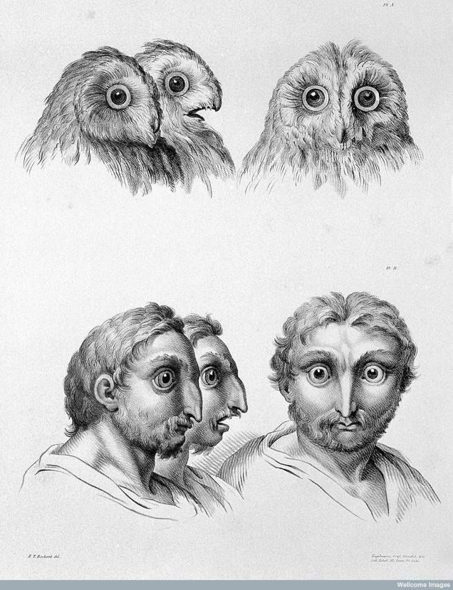 Pre-Darwin French artist Charles Le Brun (1619-1690) imagines what we'd look like if humans had evolved from owls