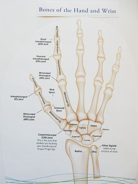 there are 27 bones in the hand and wrist all nested together with