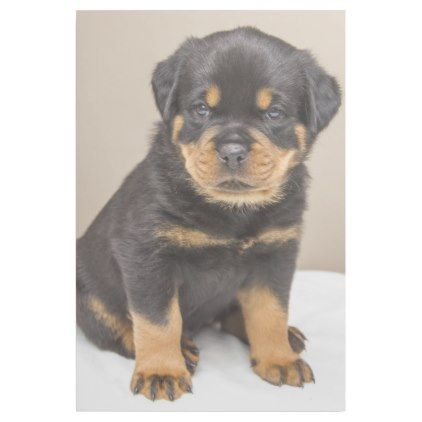 Rottweiler Puppy Portrait Gallery Wrap Zazzle Com Rottweiler