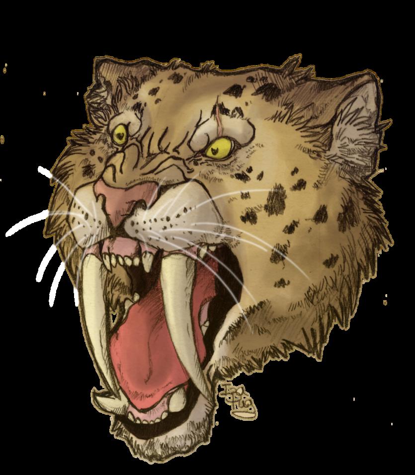 Saber Tooth Tiger Drawing Saber Tooth Tiger Skull Tattoo Saber Tiger Drawing Tiger Skull Sabertooth