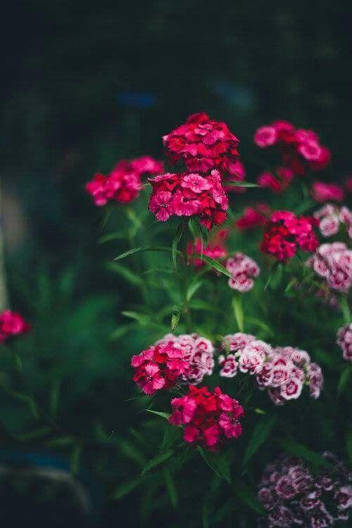 أجمل صور ورد رومانسي صور ورود حب رومانسية Garden Tools Design Garden Tools Flower Aesthetic