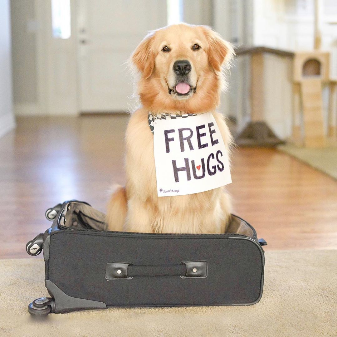 Scout Portland Or On Instagram Have Hugs Will Travel We Re Bringing Scouthugs To Victoriabc Follow Along In Funny Dog Videos Dog Gifs Cute Dogs