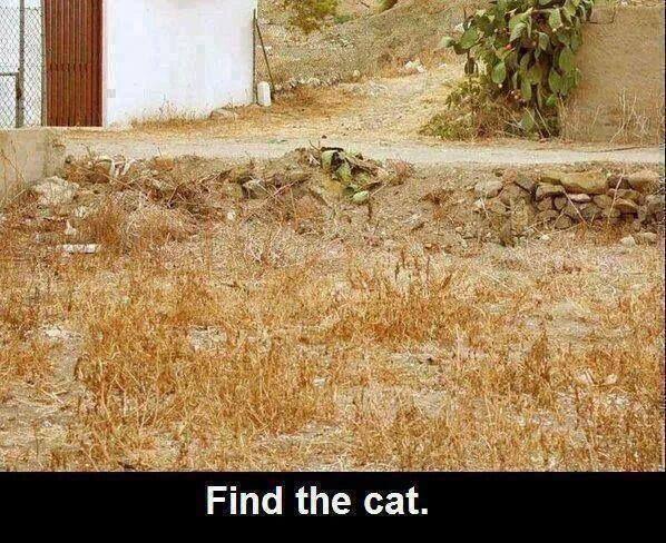 optical illusions find cat # 1