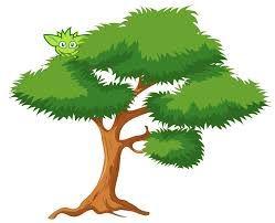 Resultado de imagem para plantas da amazonia arvores