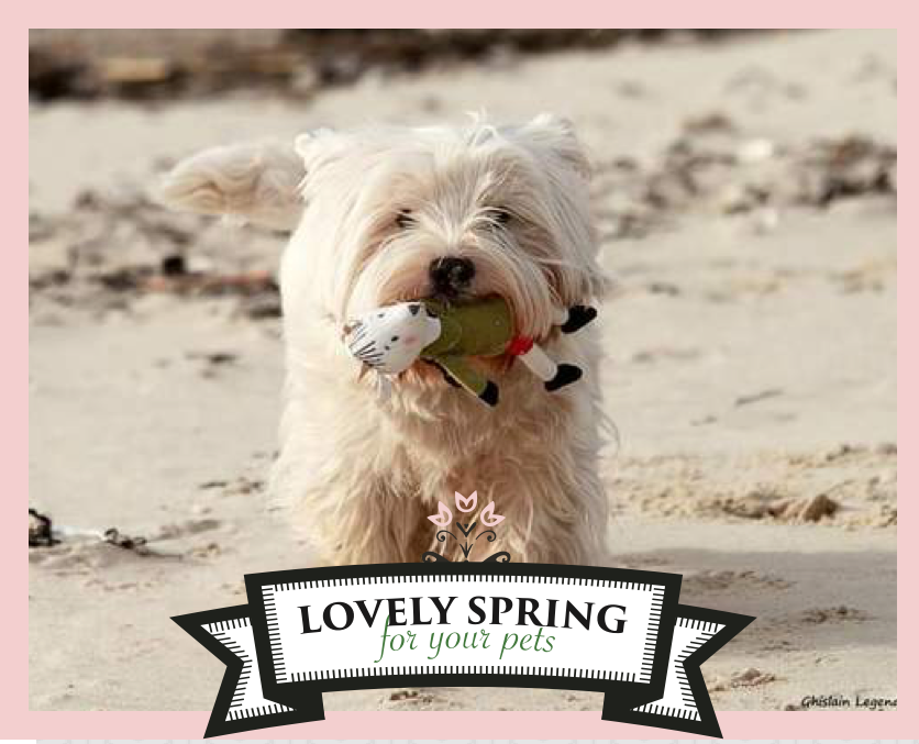 "IT'S TIME TO PLAY! Let's play with Zolux and Yummypets to win it! Just follow the steps below: Follow Zolux on Pinterest: http://ymp.io/u/Dlm / Follow Yummypets on Pinterest: http://ymp.io/u/tvb / Follow the board ""Lovely spring for your pets !"": http://ymp.io/u/sei / Repin the products you want / Results on April 13th 2015. GOOD LUCK! #game #pets #rodent #bunny #petsupply #gift #pinterest #yummypets #zolux"