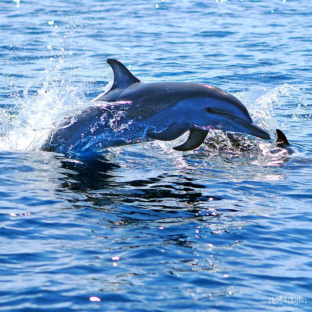 Dolphin in the Indian Ocean BelAfrique your personal