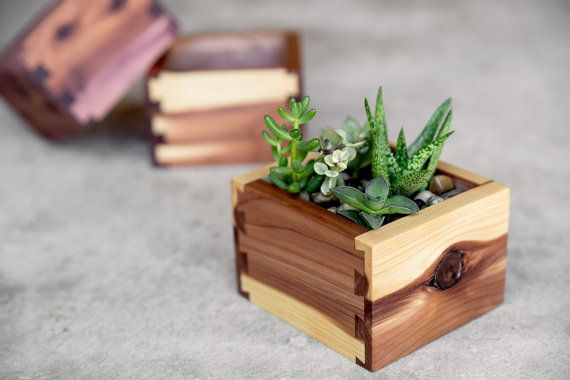 ADORABLE little succulent boxes. Probably gonna buy one for my desk. Small Cedar Desktop Planter by BurlAndDove on Etsy