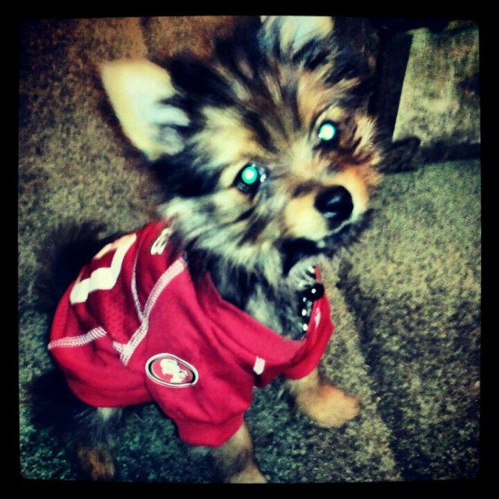 My little Maximus is a huge SanFransico 49er fan! Love my yorkie pom!