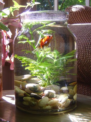 Turn your mason jar into a fish bowl. Love this idea! http://www.ivillage.com/surprising-uses-mason-jars-around-house/7-a-556047