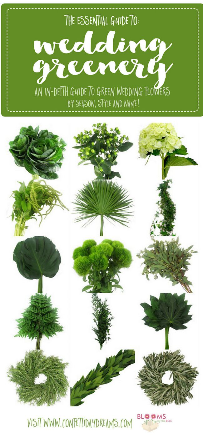 Guide To Greenery For Weddings Green Wedding Flower