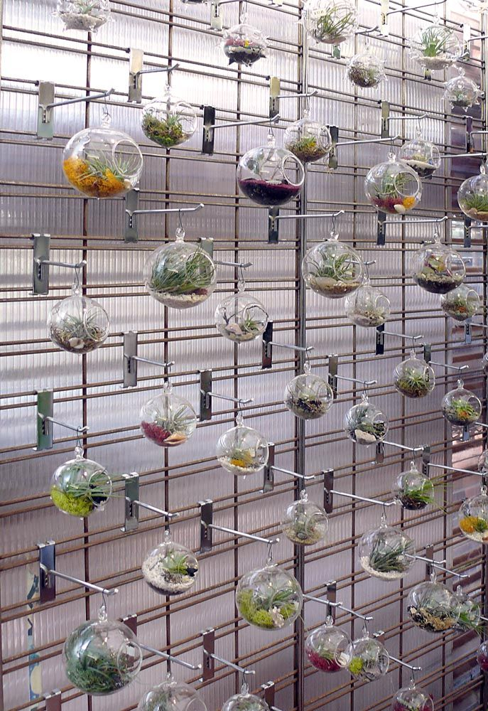 A Wall Of Hanging Glass Terrariums With Colored Moss And Airplants! Part 70