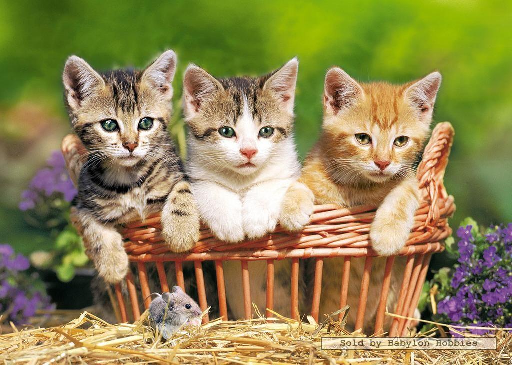Afbeeldingsresultaat voor schattige honden en katten