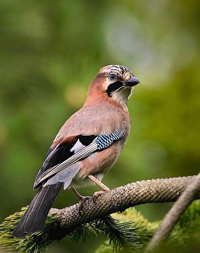 So Locken Sie Vogel In Ihren Garten Garten Vogel Im Garten Naturnaher Garten
