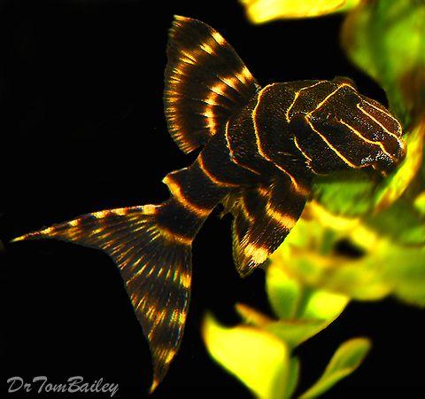 Pin By Sharon M Mccartney On Freshwater Aquariums Aquarium Fish Freshwater Fish Tropical Freshwater Fish