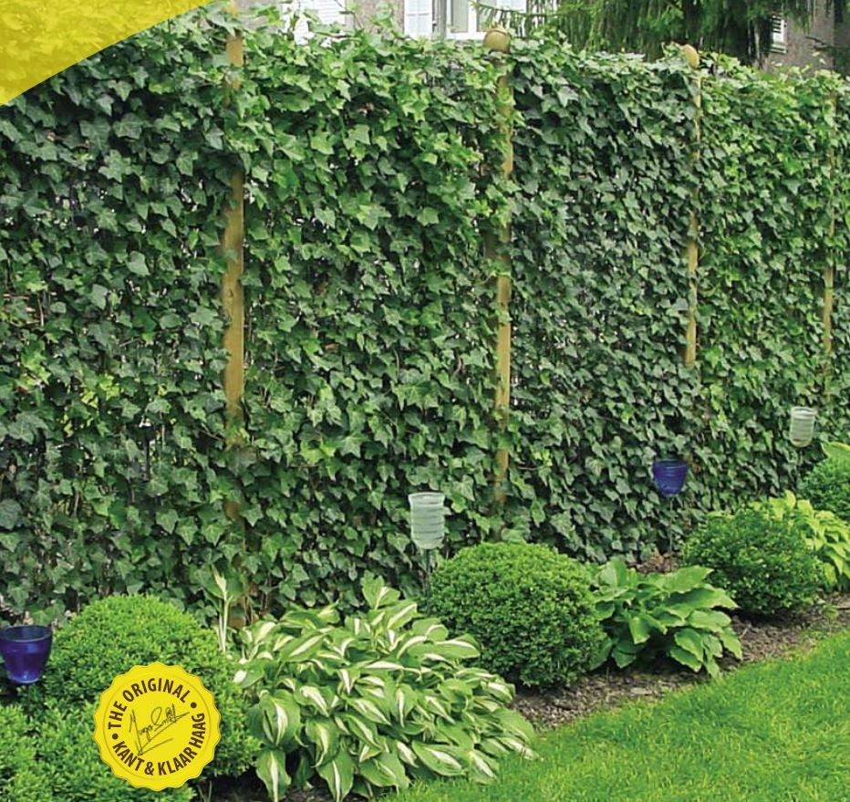 Hedera Ivy Panels For Instant Screening Garden Screening Garden