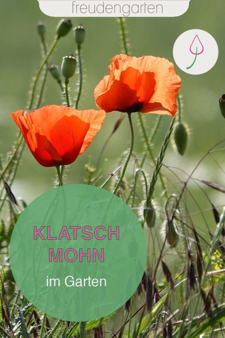 Mohnblumen Winterharte Stauden Blumenbeet Anlegen Und Garten