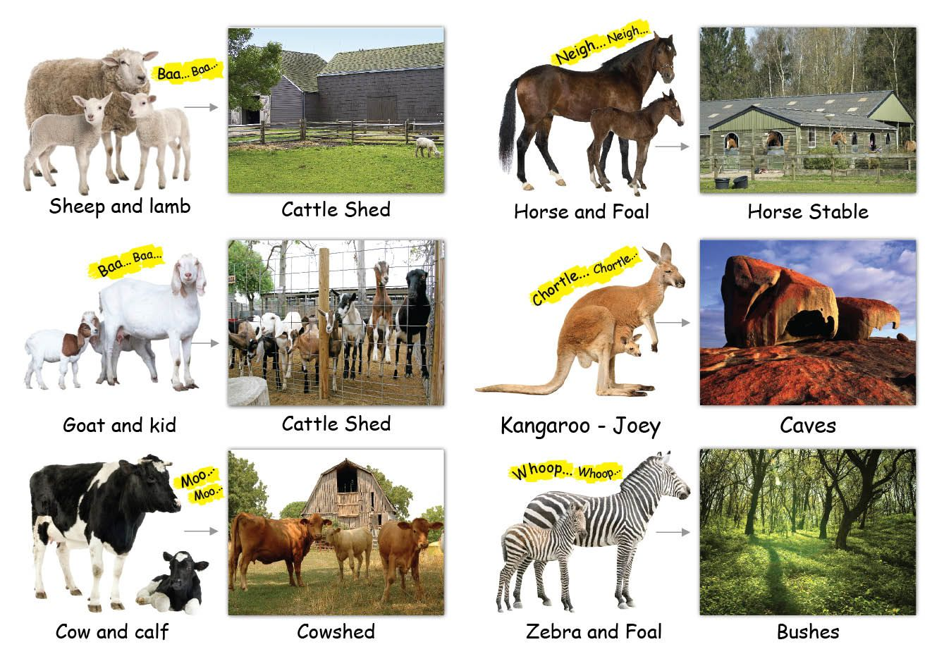 Food And Shelter Of Animals Worksheet