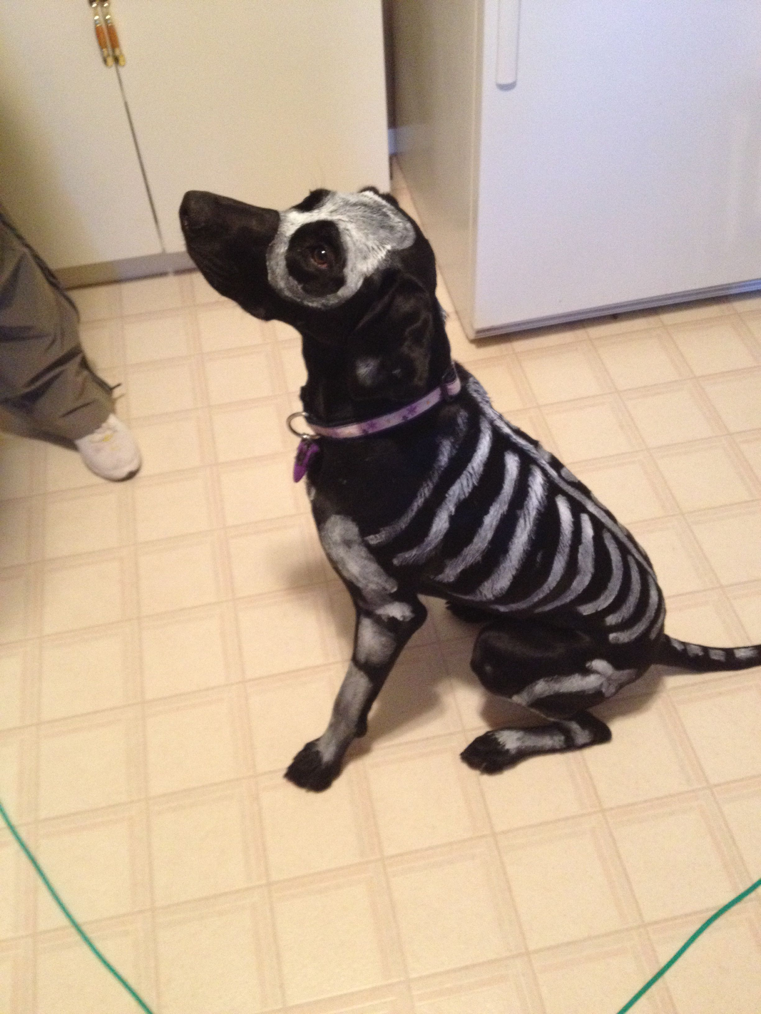 Skeleton Dog! Non-toxic and washable paint :) really easy dog ...