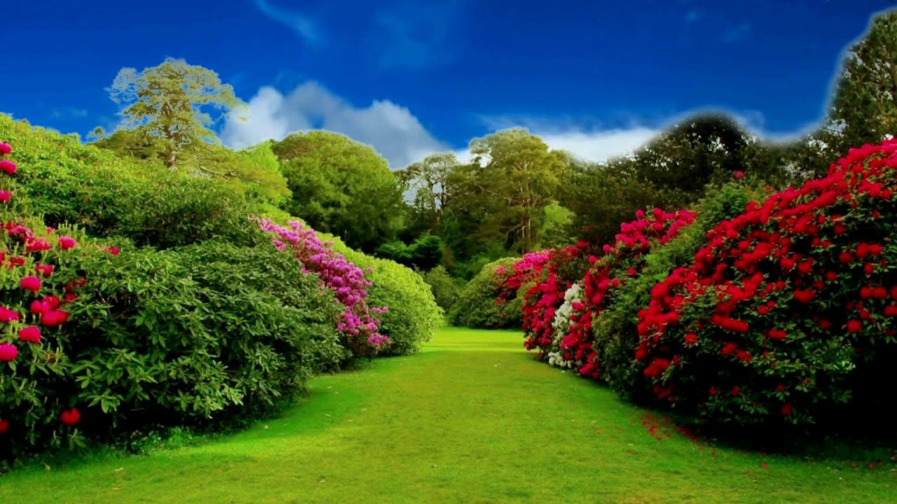 HD 1080p Beautiful Flower Garden Video, Royalty free