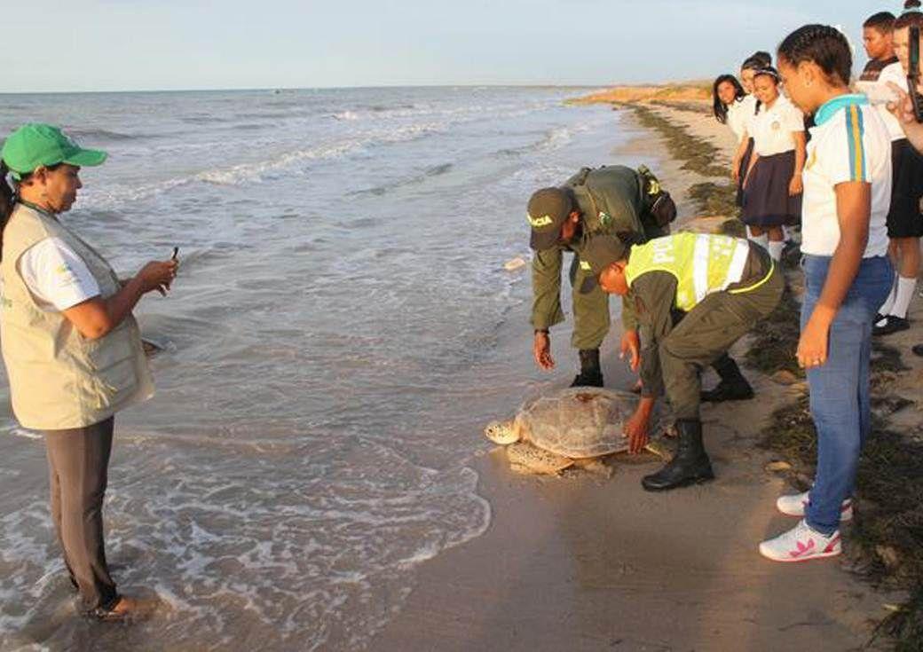 Trabajemos unidos para proteger nuestras hermosas especies. Puedes aportar tu grano de arena, tu #CompromisoAmbiental
