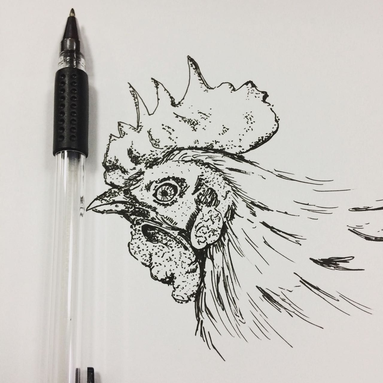 My attempt to draw a gallus gallus.