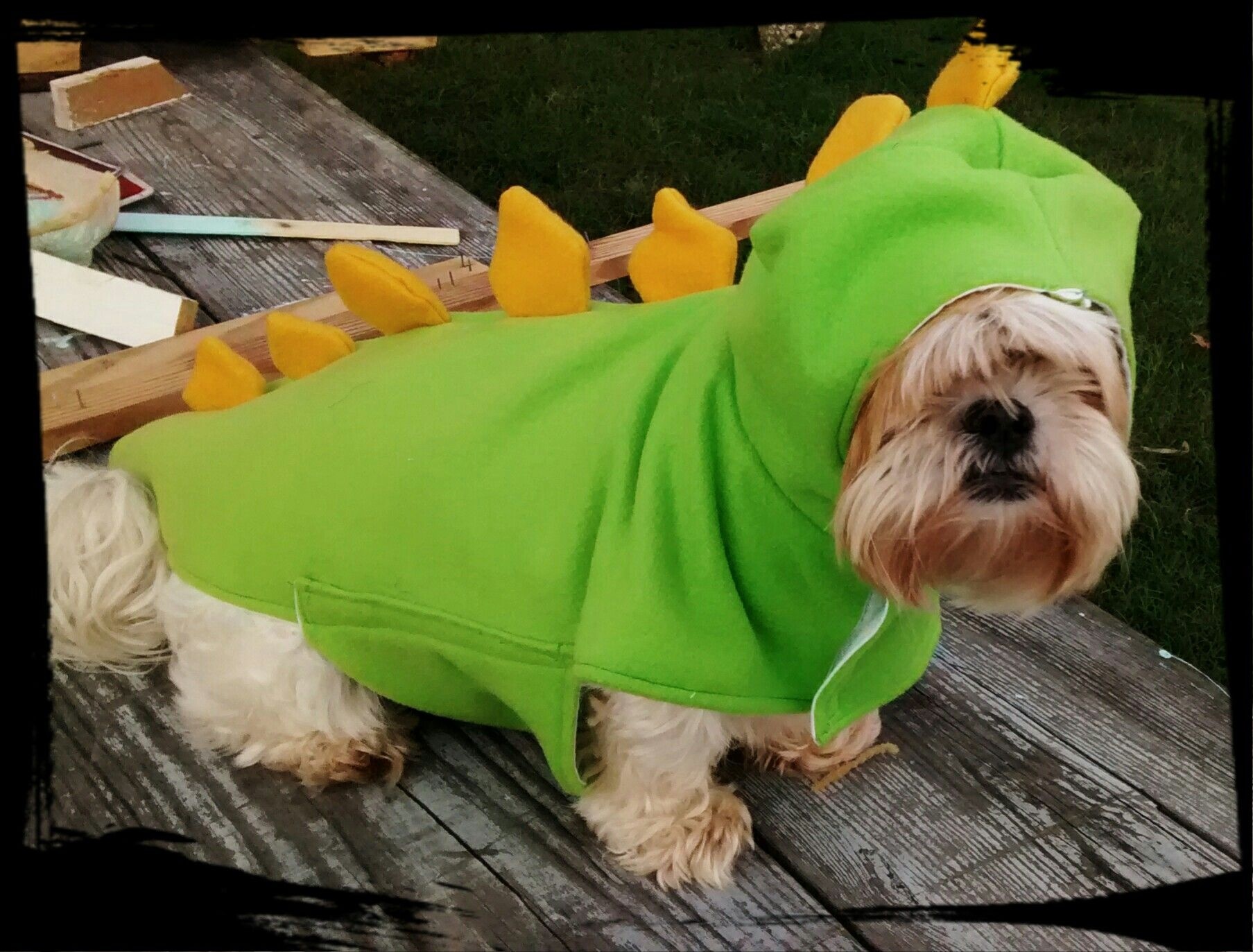 What a cutie! This is Chigger as a dinosaur! Mommy's name is Tina Wilson and they want to try ZYMOX Shampoo because this little dinosaur has sensitive skin!