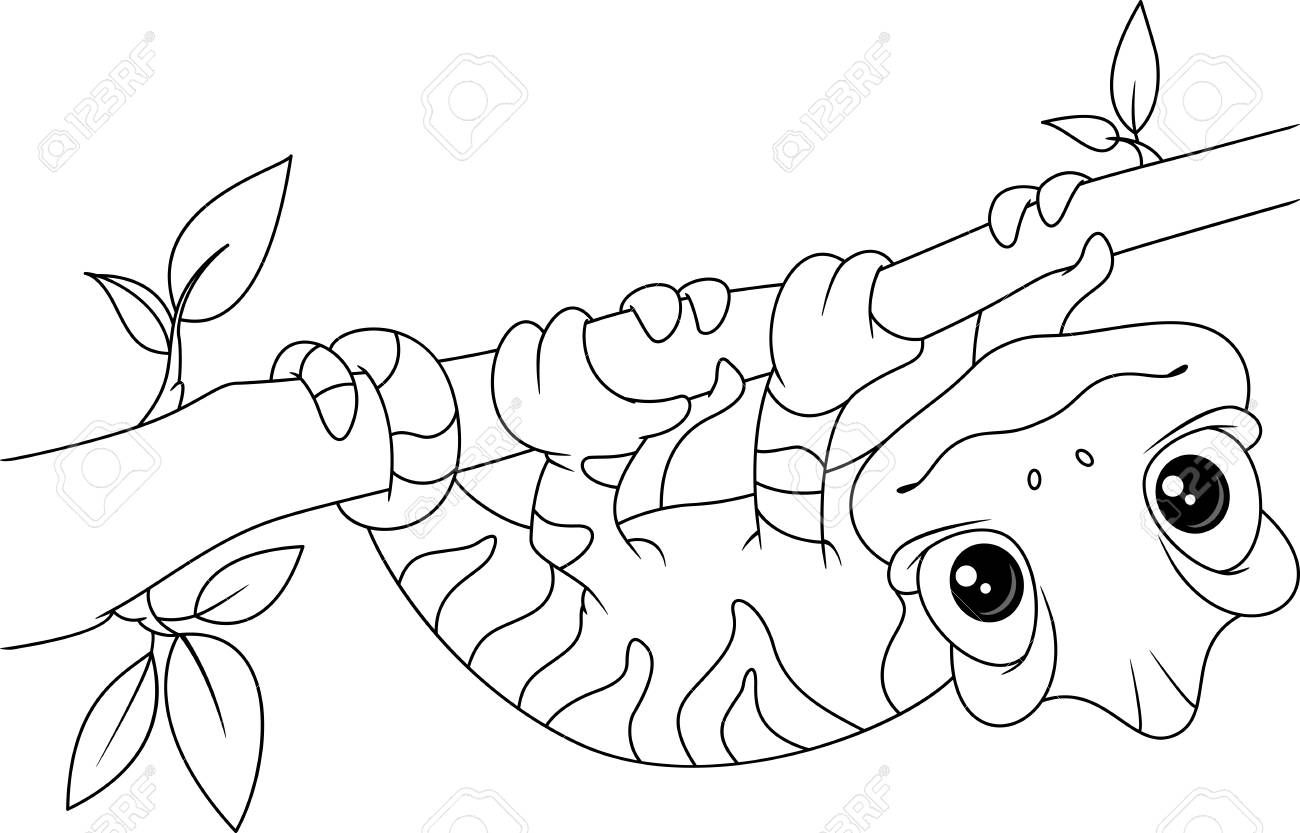 Chameleon On Branch Coloring Page Illustration Affiliate